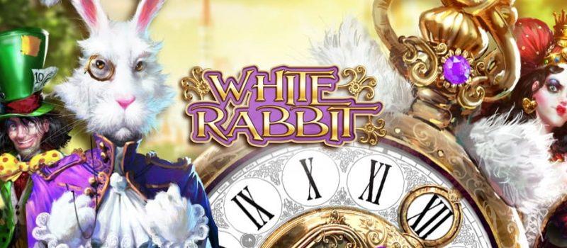 white rabbit kansikuva